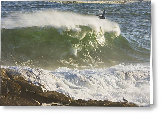 Maine Shore Greeting Cards - Large Waves And Seagulls Near Pemaquid Point On Maine Greeting Card by Keith Webber Jr