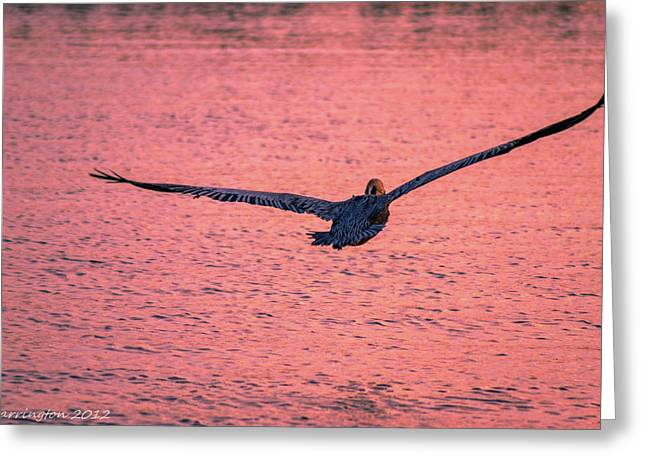 Large Wing Span Greeting Card by Shannon Harrington
