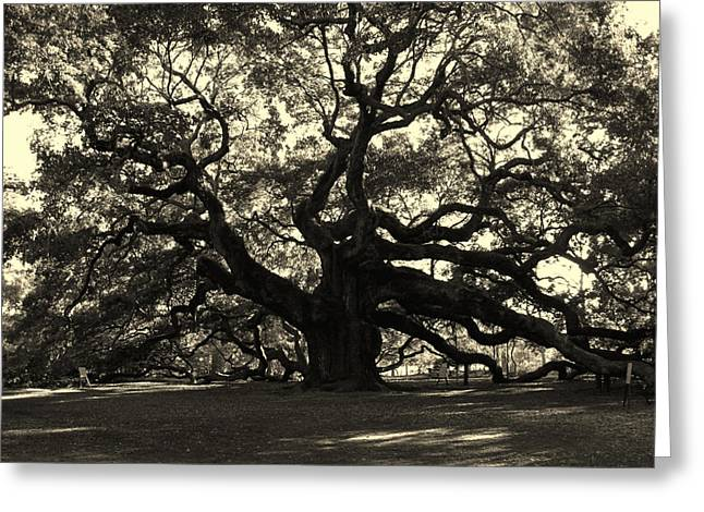 Old Tree Greeting Cards - Last Angel Oak 72 Greeting Card by Susanne Van Hulst