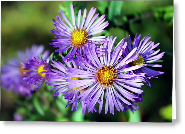 Sheryl Burns Greeting Cards - Last Bloom Greeting Card by Sheryl Burns