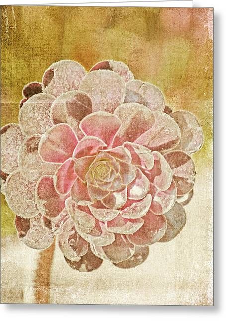 Bokeh Mixed Media Greeting Cards - Last Day of Summer Greeting Card by Bonnie Bruno