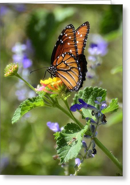 Queen Butterfly Greeting Cards - Last Days of Summer  Greeting Card by Saija  Lehtonen