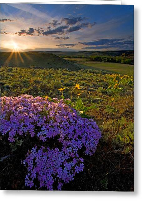 Phlox Greeting Cards - Last Light of Spring Greeting Card by Mike  Dawson