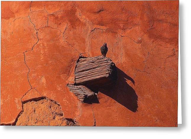 Southwestern Birds Greeting Cards - Last Pirch.. Greeting Card by Al  Swasey