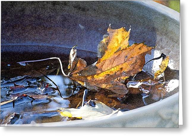 Birdbath Greeting Cards - Late Bird Bath Greeting Card by Ross Powell