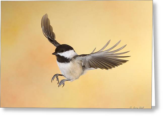 Chickadee Greeting Cards - Late For Lunch Greeting Card by Gerry Sibell