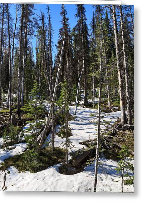 Snow Covered Ground Greeting Cards - Late Spring in Yellowstone National Park Greeting Card by Louise Heusinkveld
