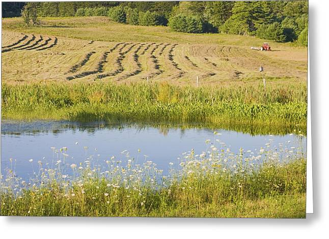 Maine Landscape Greeting Cards - Late Summer Hay Being Harvested In Maine Canvas Poster Print Greeting Card by Keith Webber Jr