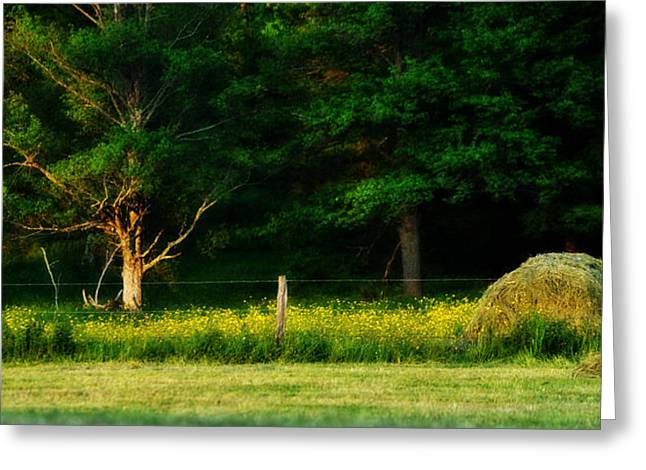 Pastue Greeting Cards - Late Summers Eve Greeting Card by Mary Frances