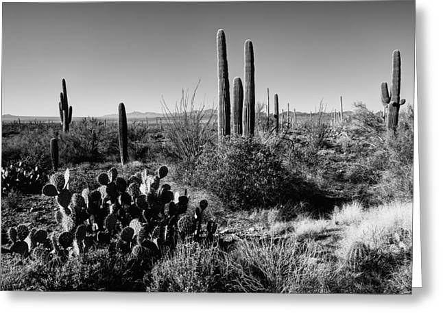 Monochrome Greeting Cards - Late Winter Desert Greeting Card by Chad Dutson