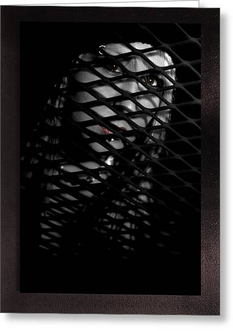Grate Mixed Media Greeting Cards - Lattice Greeting Card by Swav Jusis