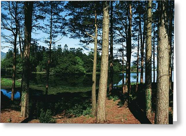 Reflecting Water Greeting Cards - Lauragh, Co Kerry, Ireland Trees In A Greeting Card by The Irish Image Collection
