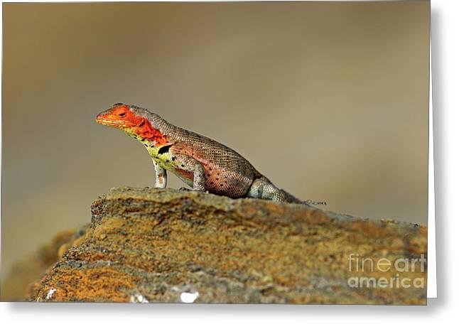 Lava Lizard Greeting Card by Sami Sarkis