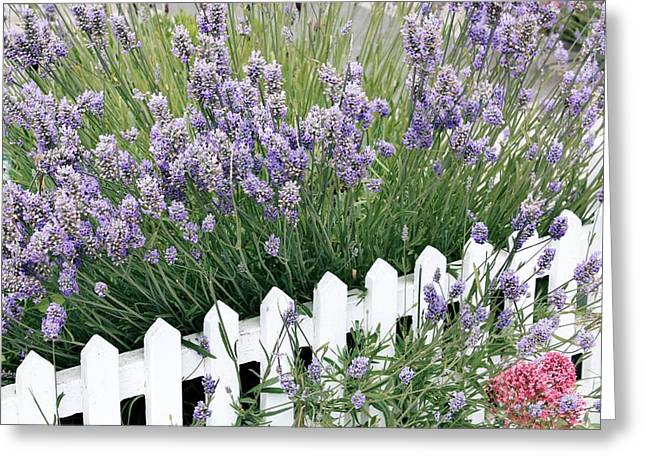 Essential Greeting Cards - Lavender And Picket Fence Greeting Card by Tony Craddock