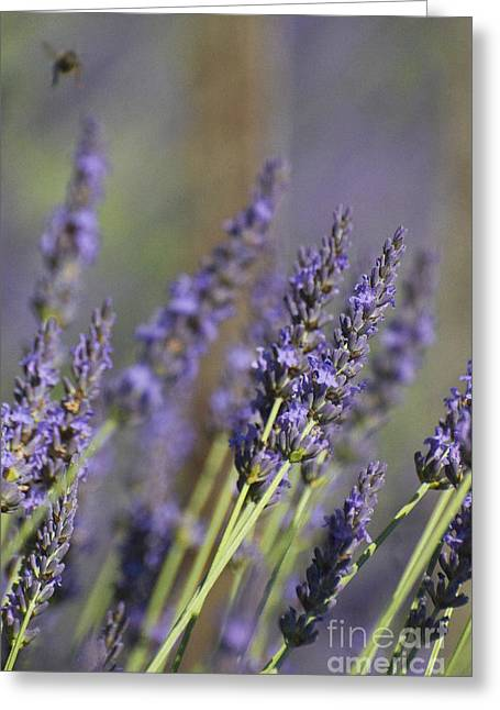 Pink And Lavender Greeting Cards - Lavender and the Bee Greeting Card by AdSpice Studios