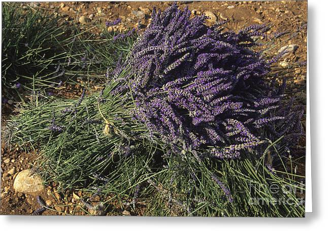 The Plateaus Greeting Cards - Lavender Greeting Card by Bernard Jaubert