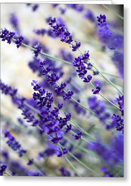 Lavandula Greeting Cards - Lavender Blue Greeting Card by Frank Tschakert