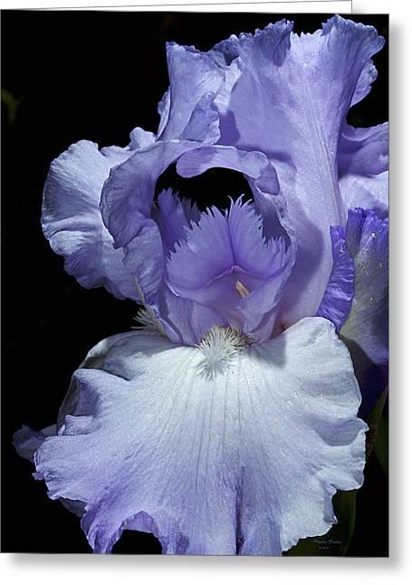 Lavender Blue Iris Greeting Card by Phyllis Denton