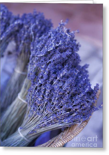 Paul Grand Greeting Cards - Lavender bunches in Provence Greeting Card by Paul Grand