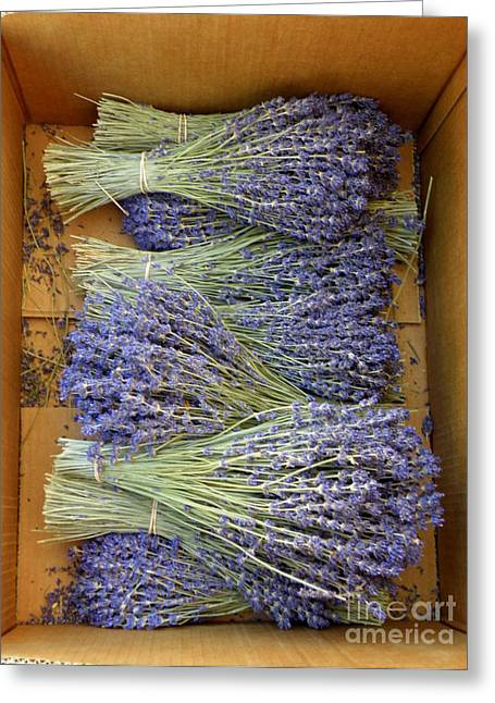 Lainie Wrightson Greeting Cards - Lavender Bundles Greeting Card by Lainie Wrightson