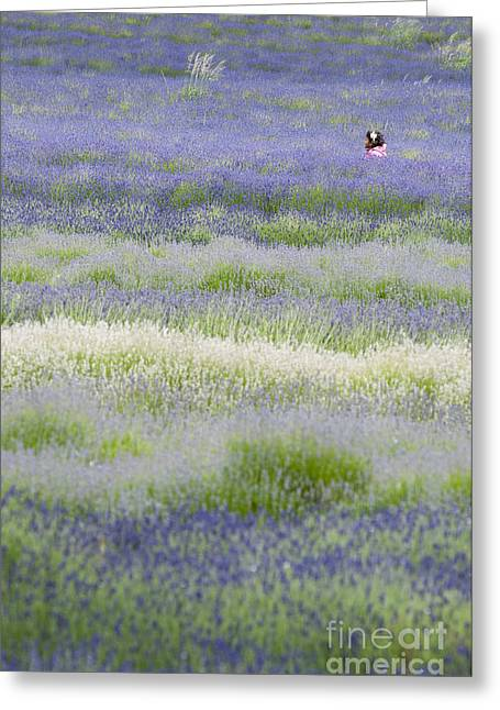 British Portraits Greeting Cards - Lavender field Greeting Card by Andrew  Michael