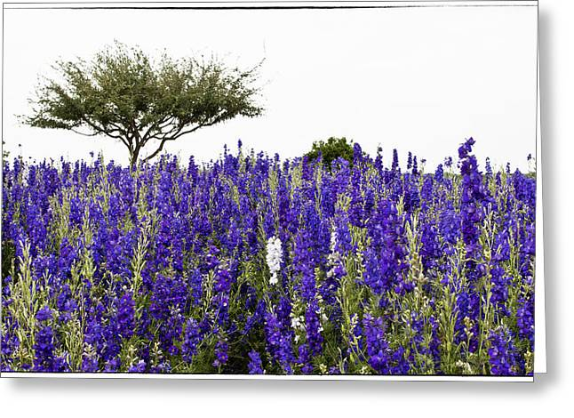 Lavender Field Greeting Card by Lisa  Spencer