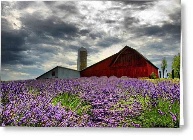 Horton Greeting Cards - Lavender Field Greeting Card by Russell Todd