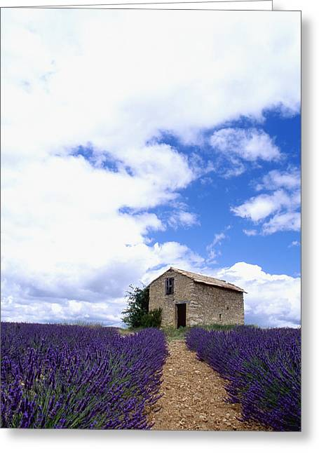 South Of France Greeting Cards - Lavender Fields Greeting Card by Axiom Photographic