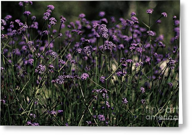 Card For Photographer Greeting Cards - Lavender Garden II Greeting Card by Jayne Logan Intveld