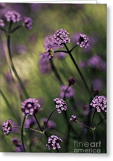 Card For Photographer Greeting Cards - Lavender Garden III Greeting Card by Jayne Logan Intveld