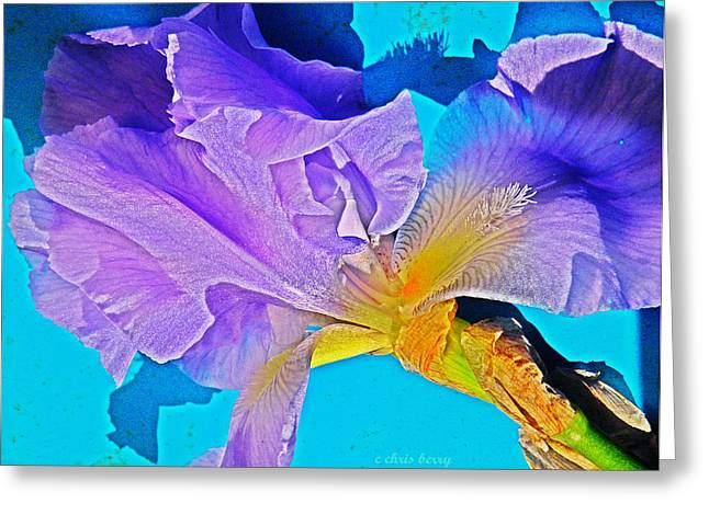 Yearly Greeting Cards - Lavender Iris  Greeting Card by Chris Berry