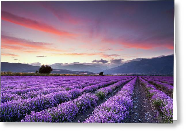 Field. Cloud Greeting Cards - Lavender Season Greeting Card by Evgeni Dinev