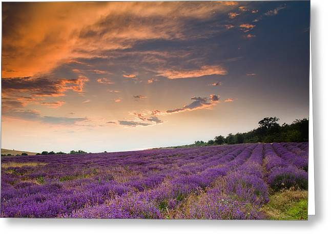 Field. Cloud Greeting Cards - Lavender sunset Greeting Card by Evgeni Dinev