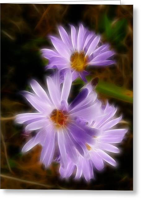 Scenic Greeting Cards - Lavender Wild Aster Flowers Abstract Greeting Card by Cindy Wright