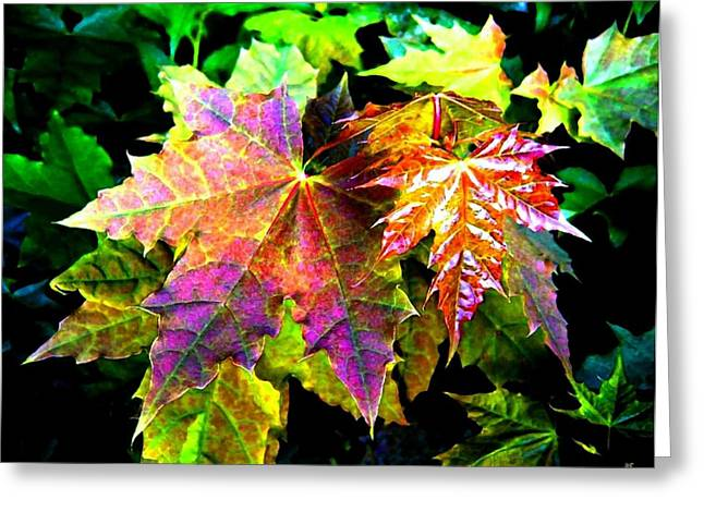 Colorful Photos Greeting Cards - Lavish Leaves 2 Greeting Card by Will Borden
