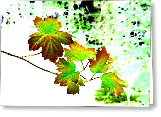 Colorful Photos Greeting Cards - Lavish Leaves 4 Greeting Card by Will Borden