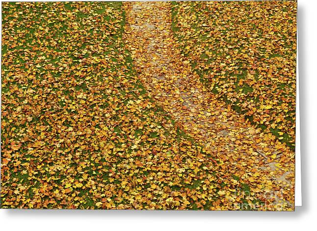 Leafage Greeting Cards - Lawn Covered with Fallen Leaves Greeting Card by Oleksiy Maksymenko