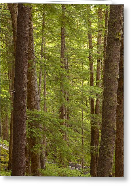 Prints Of Alaska Greeting Cards - Layers of Green Greeting Card by Tim Grams