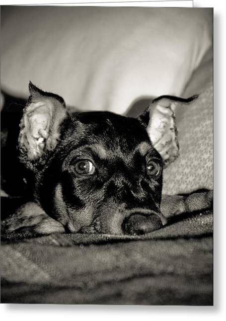 Puppies Photographs Greeting Cards - Lazy Days Greeting Card by Melissa  Riggs