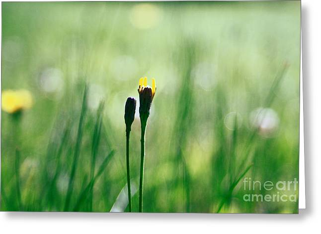 Impressionist Photography Greeting Cards - Le Centre de l Attention - GREEN s0101 Greeting Card by Variance Collections