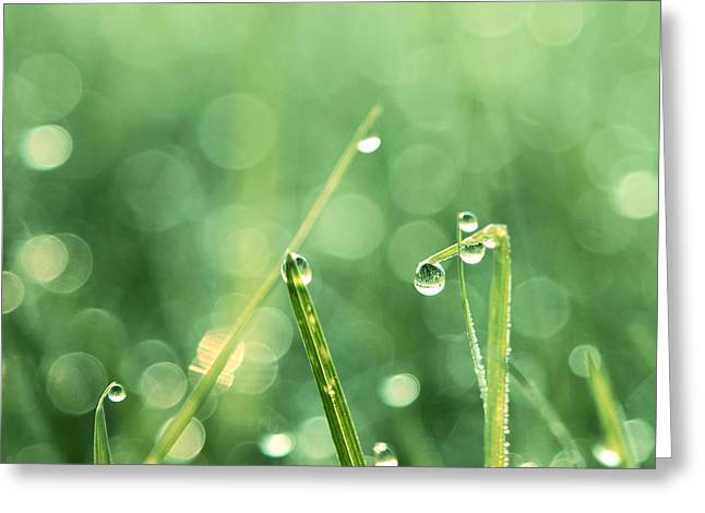 Water Droplets Greeting Cards - Le Reveil - s01c Greeting Card by Variance Collections