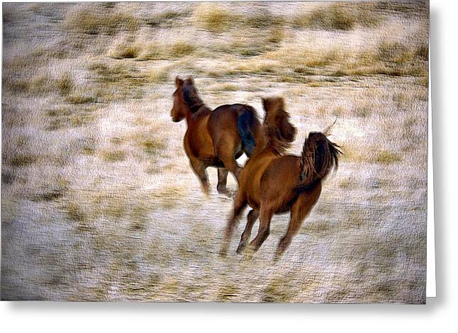Art Horses Greeting Cards Greeting Cards - Lead The Way Greeting Card by James Steele