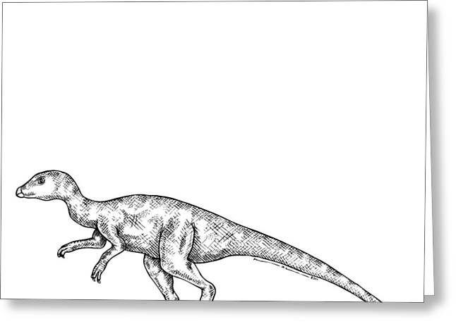 Nature Study Drawings Greeting Cards - Leaellynasaura - Dinosaur Greeting Card by Karl Addison