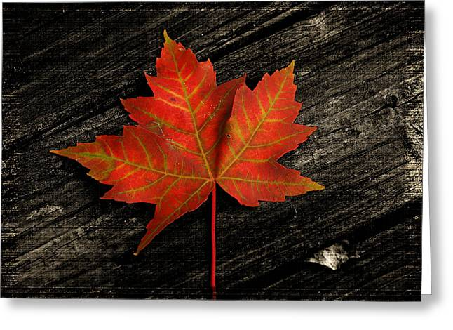 Red Leaves Greeting Cards - Leaf Greeting Card by Brian Mollenkopf