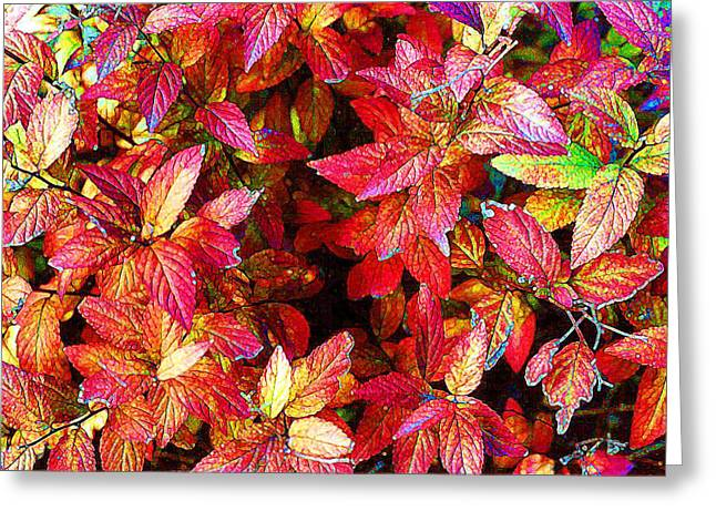 Autum Abstract Greeting Cards - Leaf Cave PD Sat  Greeting Card by Lyle Crump