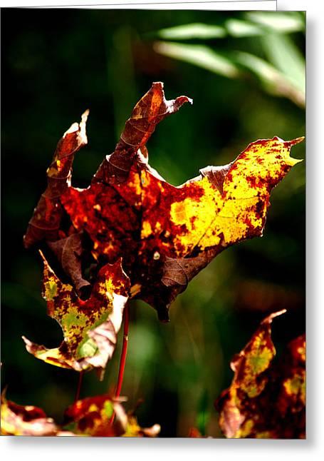 Best Sellers -  - Nature Center Pond Greeting Cards - Leaf Decay Greeting Card by LeeAnn McLaneGoetz McLaneGoetzStudioLLCcom