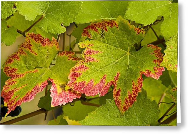 Jean Noren Greeting Cards - Leaf Design Greeting Card by Jean Noren