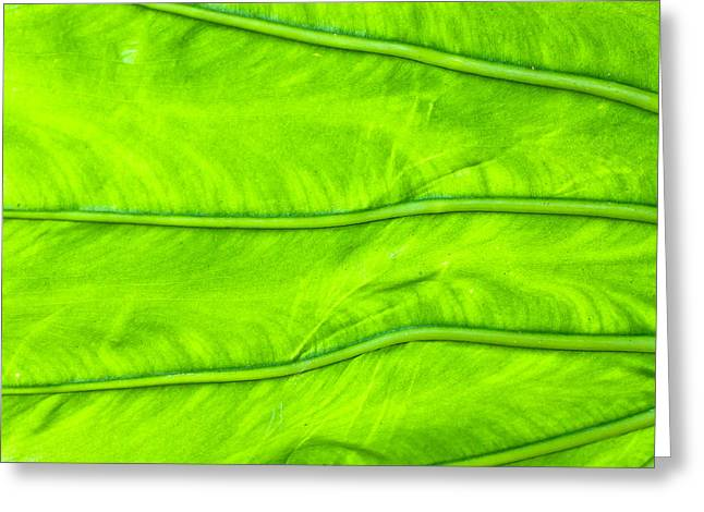 Photosynthesis Greeting Cards - Leaf detail Greeting Card by Tom Gowanlock