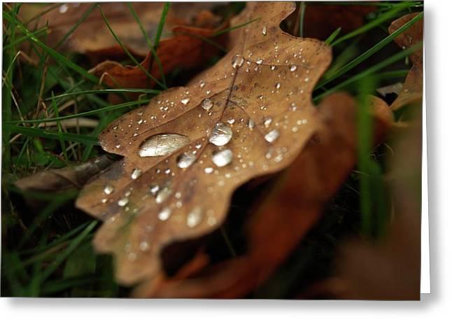 Drop Greeting Cards - Leaf in autumn. Greeting Card by Bernard Jaubert