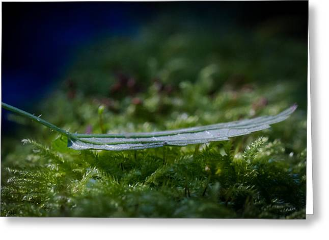 Wandern Greeting Cards - Leaf On Grass Greeting Card by Andreas Levi